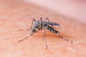 Vacina contra dengue está em fase final de produção